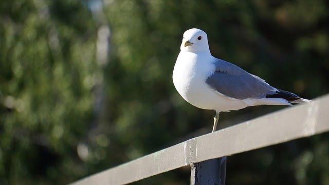 bird-139704_640